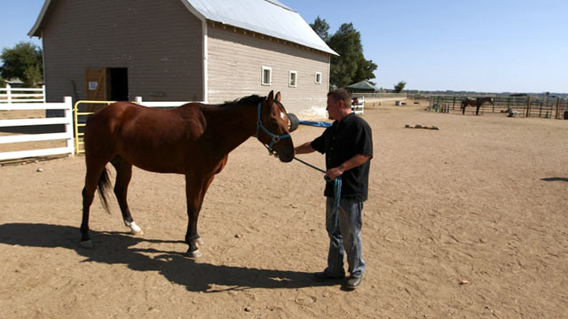 PHOTO: Horses are being used in an unconventional form of couples counseling at a Colorado ranch.