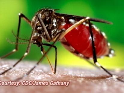 VIDEO: Dengue Fever Risk