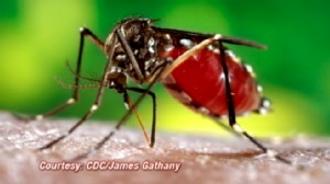 VIDEO: Dengue Fever Risk