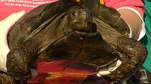 VIDEO: Salmonella Linked to Pet Turtles