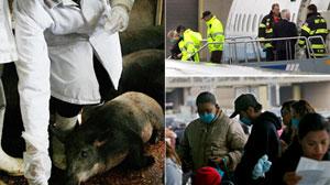 Swine Flu Follies