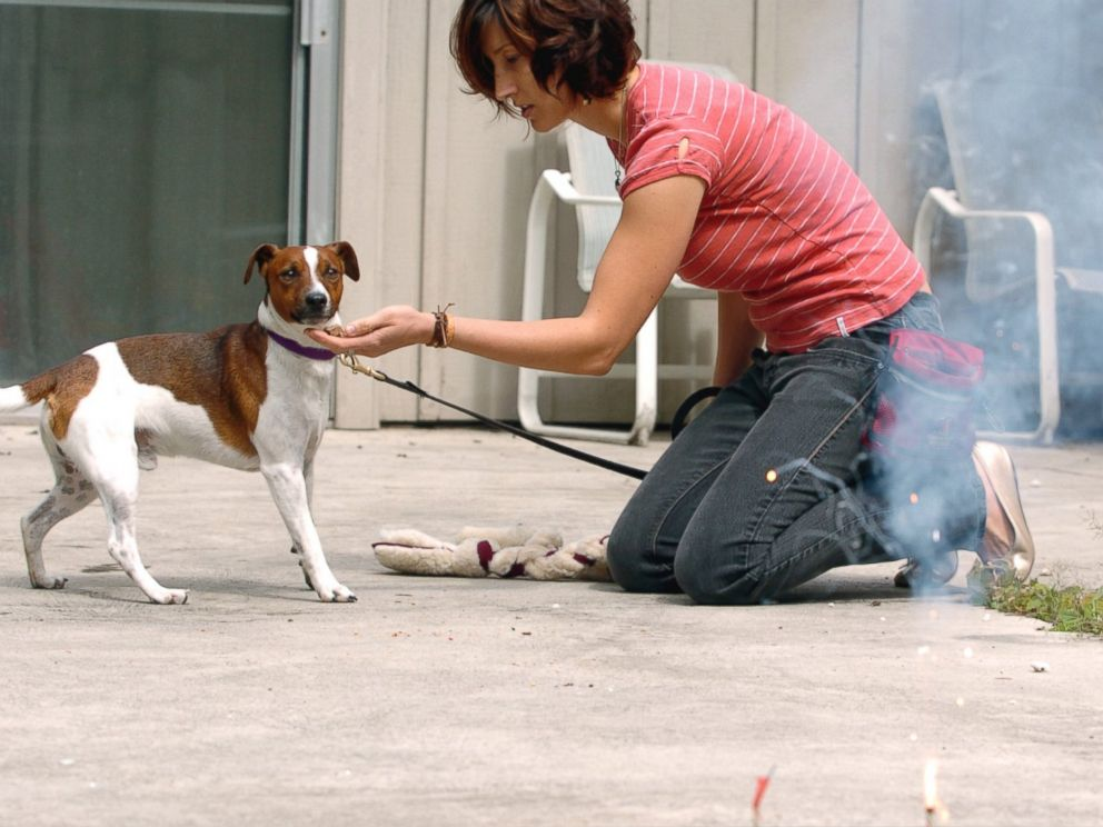 How to Help Dogs Brace for July 4th Fireworks