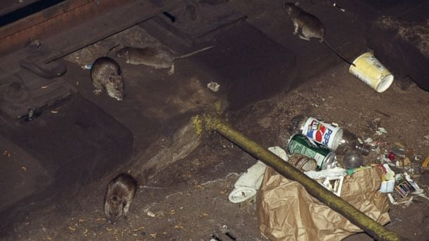 PHOTO: Rats seen on the NYC subway tracks at the 53rd. St. station.