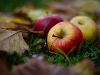 Hypo-Allergenic Apples Being Developed