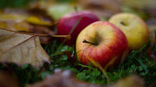 PHOTO: Scientists are working to create a hypoallergenic apple through the process of genetic modification.