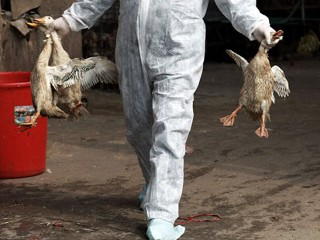 3 More Cases of New Bird Flu Strain