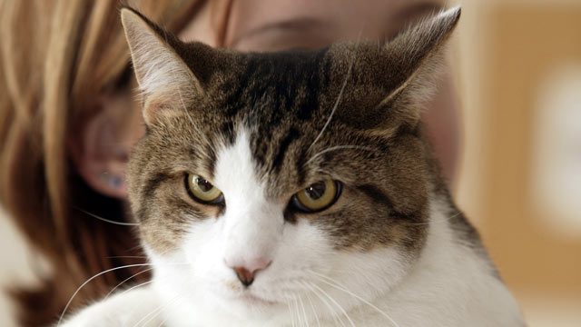 PHOTO: According to a new study, handling cat litter may put humans in contact with a cat parasite that causes a disease that may lead to suicide.