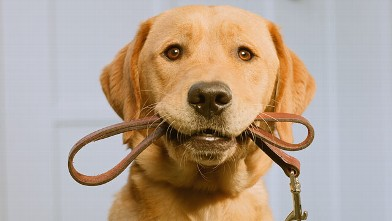 PHOTO: A new study found that dogs can sense human communication in a way similar to infants.