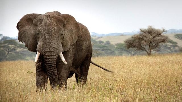 PHOTO:elephant