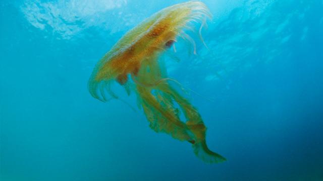 PHOTO: Jellyfish