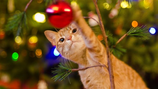 PHOTO: Ingesting seasonal plants and tinsel can make your pet really sick.