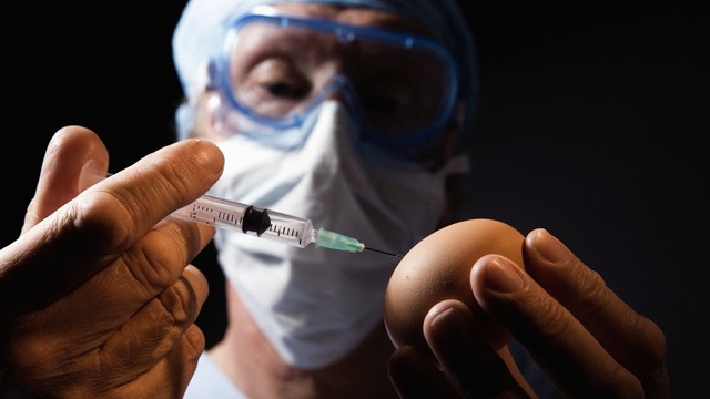 PHOTO: Lab worker injecting fluid into chicken egg