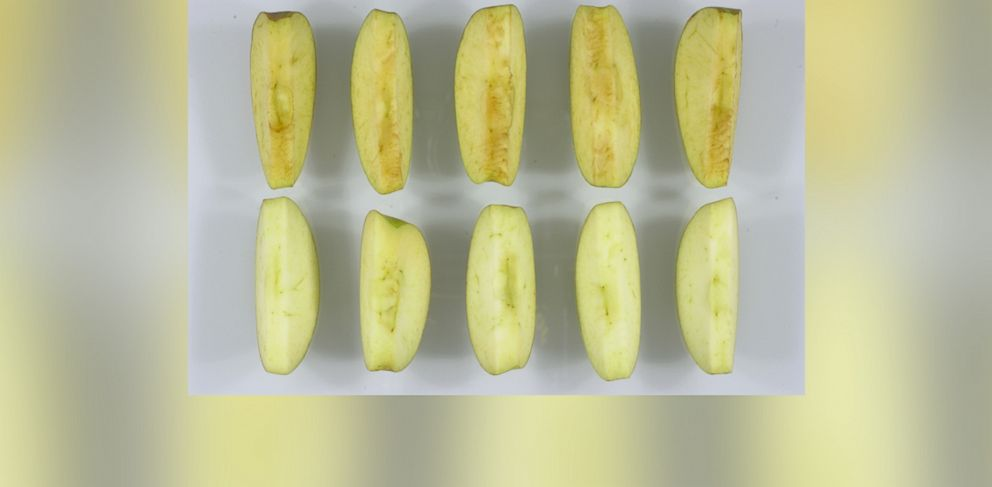 PHOTO: Arctic brand Golden apple slices (bottom) compared to conventional apple slices.