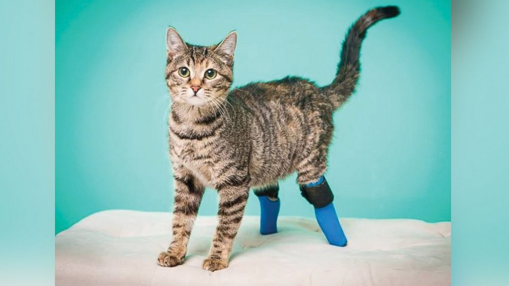 PHOTO: Nora lost her back legs to an unknown trauma a few years ago. Her prosthetics do a good job protecting her back legs and allowing her to move naturally.