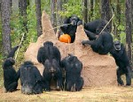 PHOTO: Chimps probe termite mound