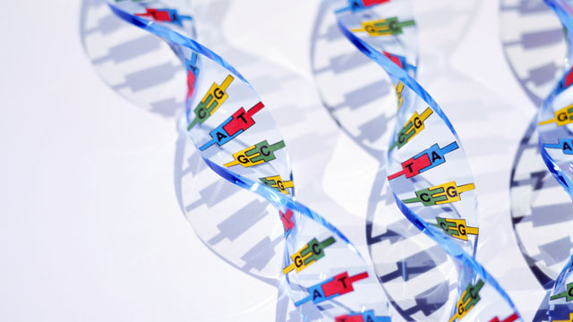 PHOTO: DNA double helix models are seen.