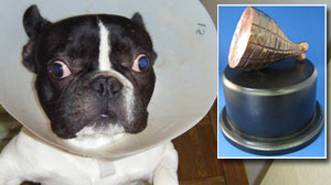 Photo: Twelve Bizarre Pet Accidents Vie For First â??H