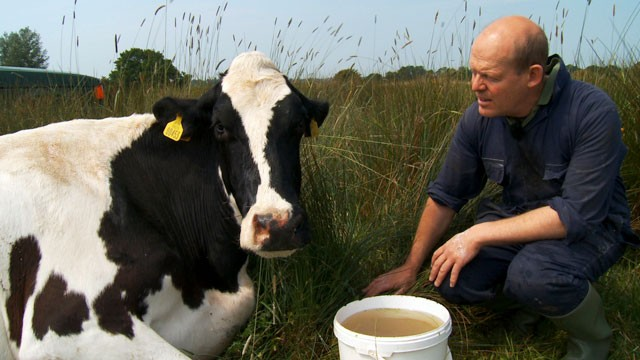 PHOTO: Uk farmer Stephen Hook has a special bond with his cow Ida.