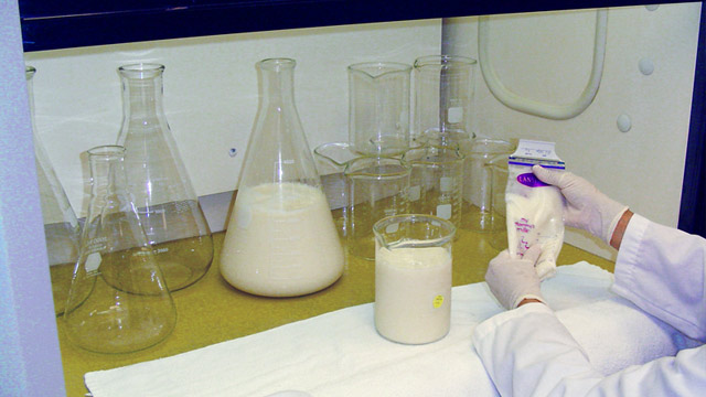 PHOTO: Milk bank lab assistant prepares human breast milk