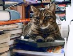 PHOTO: Penny the library cat