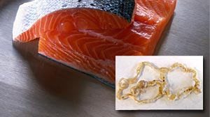 Photo: salmon tapeworm