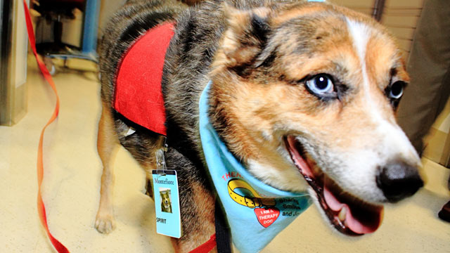 PHOTO: Spirit has been trained as a pet enrichment therapy dog, a