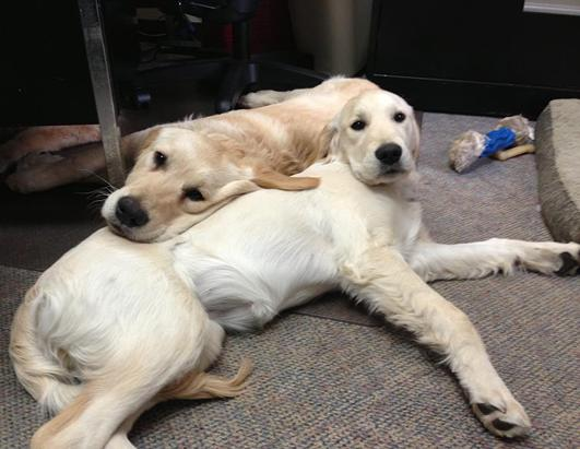 Therapy Dogs Provide Comfort to the Suffering in Boston
