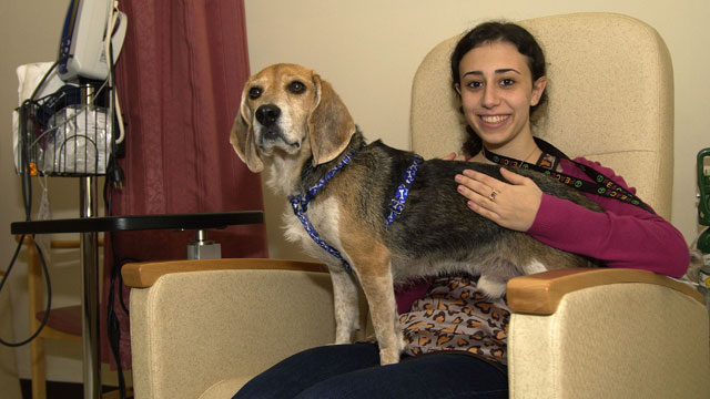 PHOTO: Beagle Reduces MRI Anxiety, Researchers Say