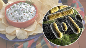 Photo: Salmonella Contamination of A