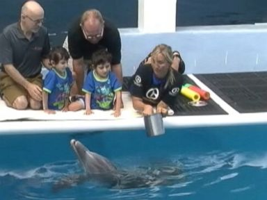 Formerly Conjoined Twins Meet Dolphin With Prosthetic Tail