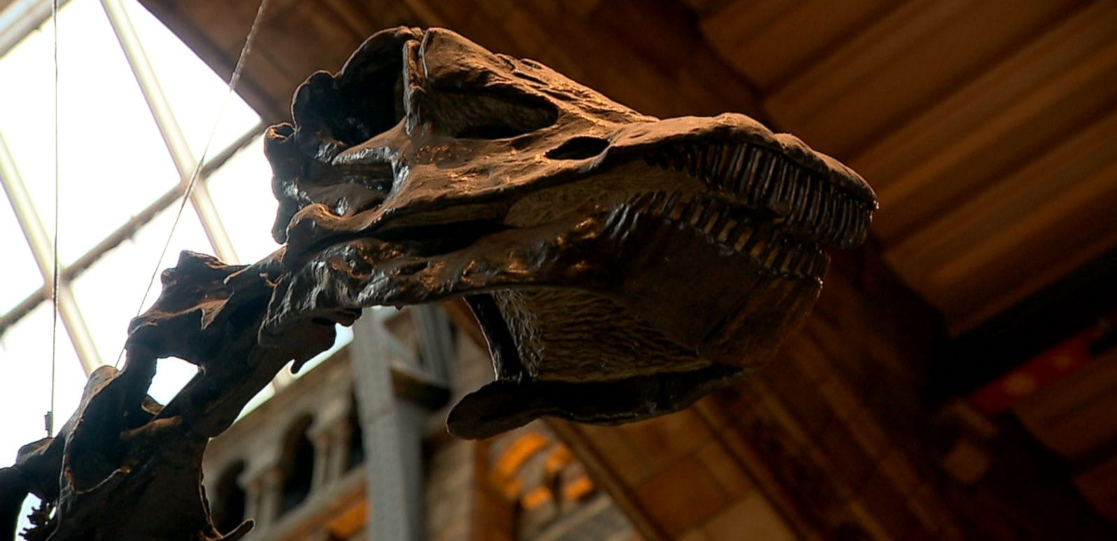 VIDEO: Fans of the diplodocus skeleton cast turned to social media to protest the planned removal of the beloved dinosaur from the entrance of London's Natural History Museum.