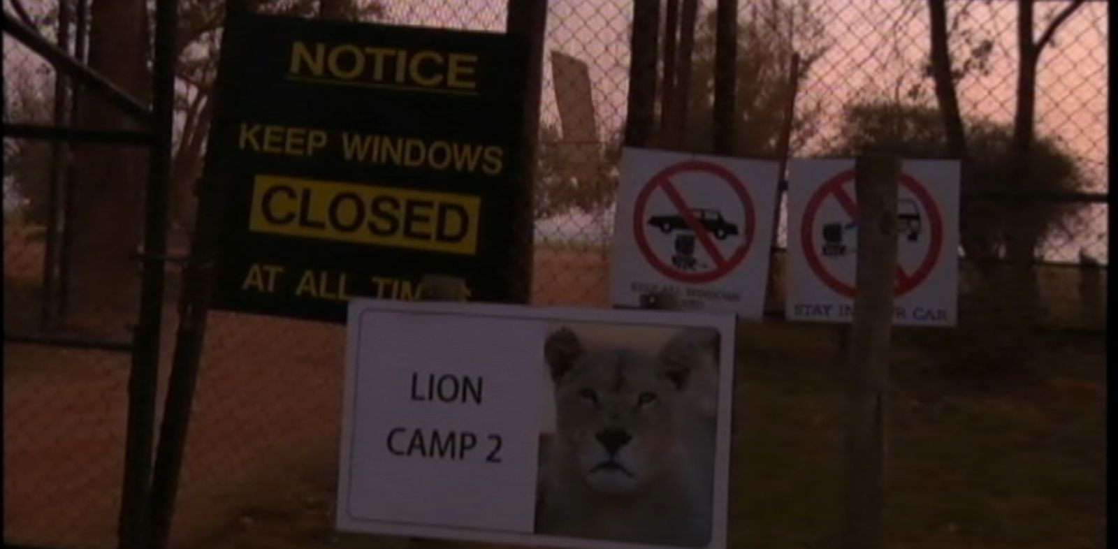 VIDEO: The woman was killed when a lion lunged through the open window of a car at The Lion Park in Johannesburg, South Africa.