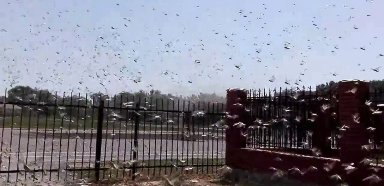 VIDEO: A video shot by a local man in Achikulak, a village in the Stavropol region, shows thousands of the bugs swarming towards a church.
