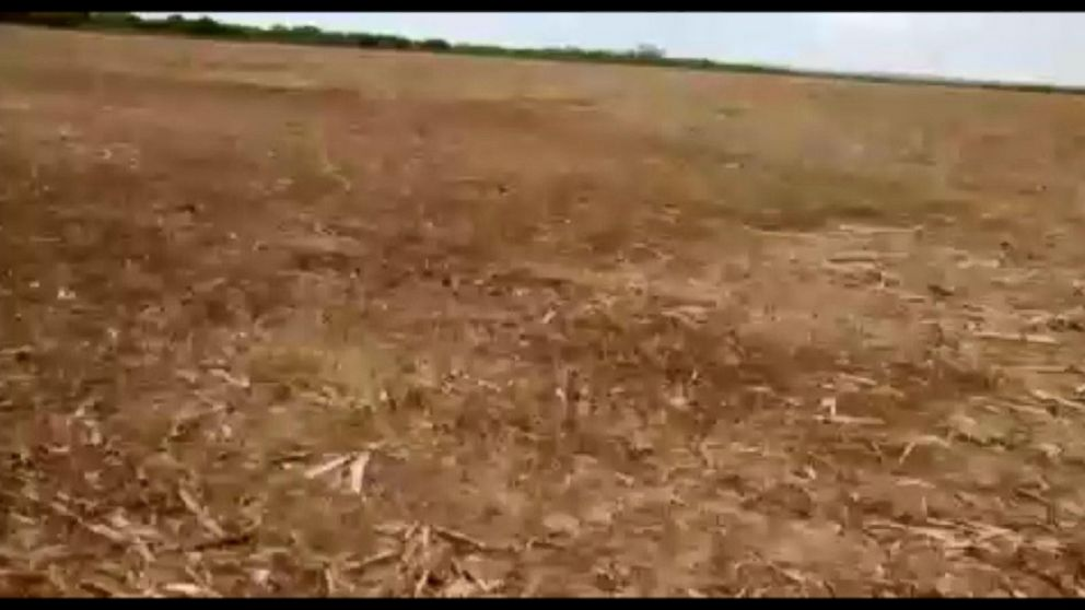 VIDEO: Locusts Swarm Farms in Argentina