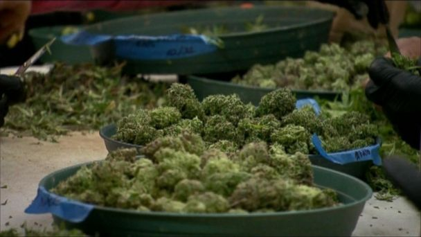 The proposed law allows four plants to be grown at home.