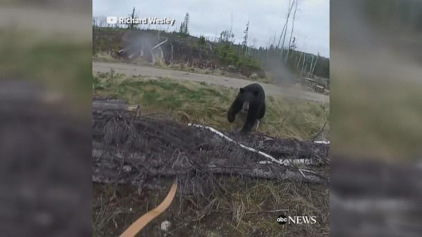 VIDEO: Black bear attacks hunter in terrifying video