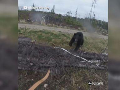 WATCH:  Black bear attacks hunter in terrifying video
