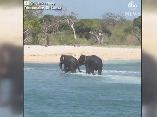WATCH:  2 elephants rescued by Sri Lankan Navy