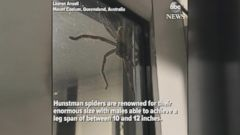 A woman in Australia got quite a fright when she saw a giant spider on her home on July 23.
