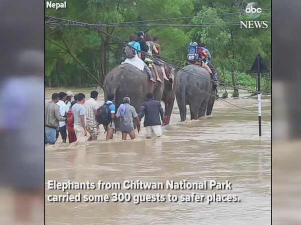 WATCH:  Tourists trapped in floodwaters rescued by elephants in Nepal