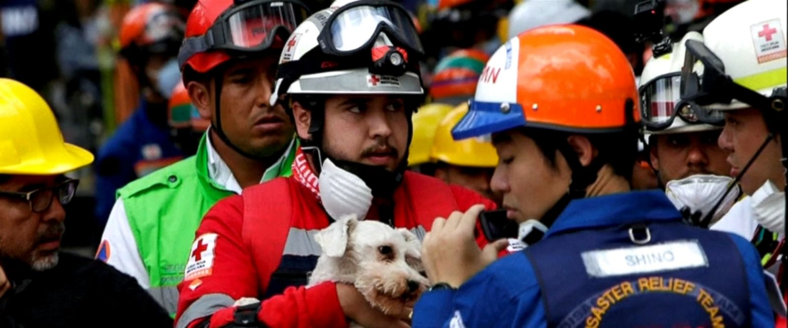 VIDEO: The dog was found in the rubble of a collapsed apartment in Mexico City.