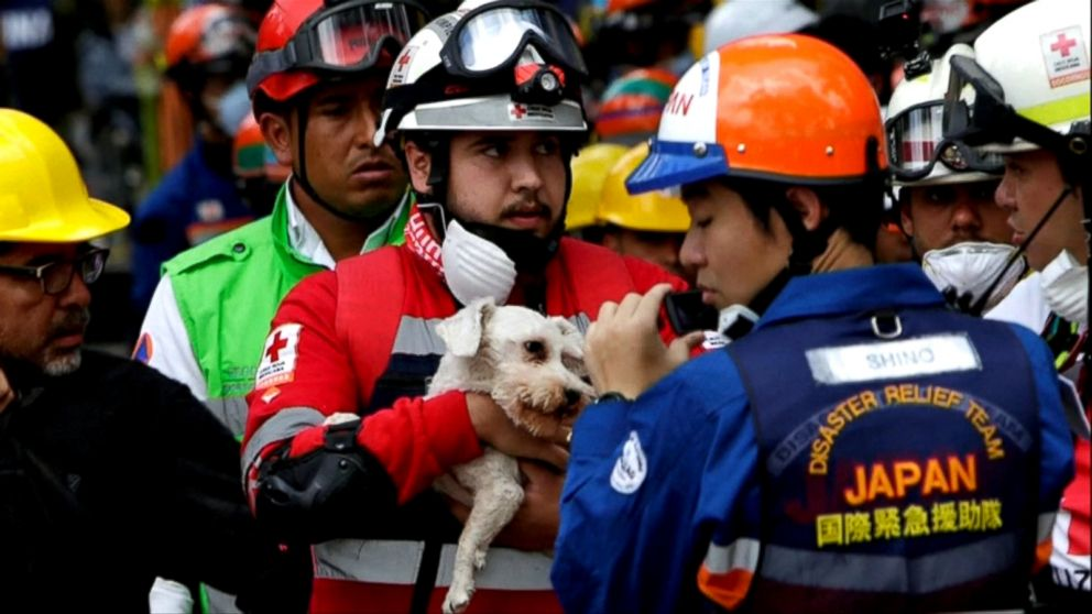 Dog rescued from rubble 6 days after Mexico  earthquake