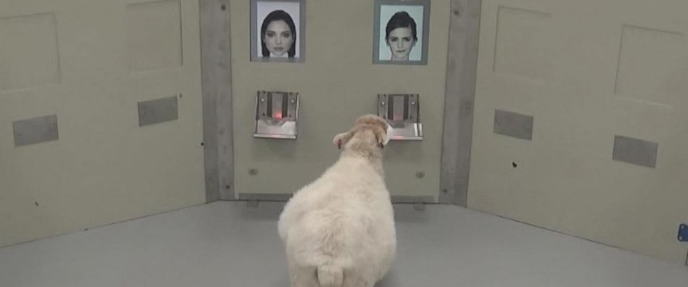 Researchers at Cambridge University have trained 8 sheep to recognize faces.