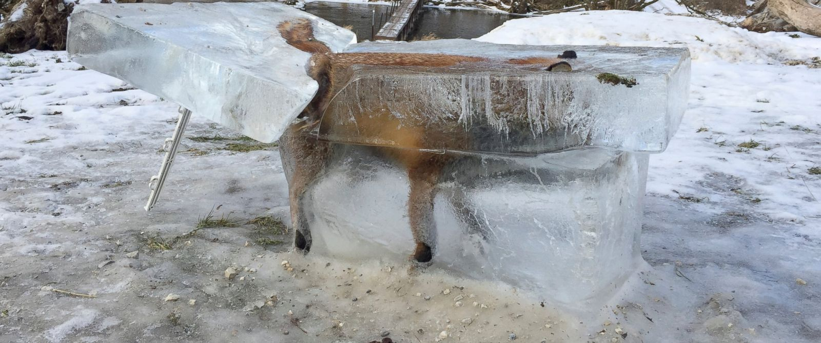 PHOTO: A block of ice containing a drowned fox who broke through the thin ice of the Danube river four days earlier sits on the bank of the Danube river in Fridingen, southern Germany, Jan. 13, 2017.