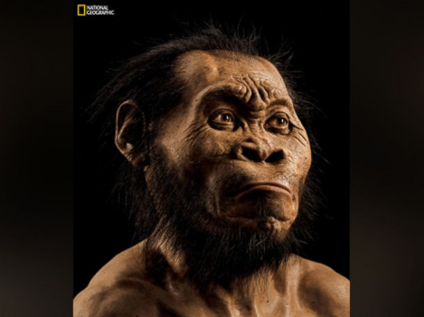 PHOTO: This March 2015 photo provided by National Geographic from their October 2015 issue shows a reconstruction of Homo naledis face by paleoartist John Gurche at his studio in Trumansburg, N.Y.