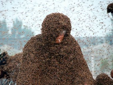 PHOTO: Chinese beekeeper Gao Bingguo is fully covered with bees as he challenges to set a new Guinness World Record in Liangzhuang, China, May 25, 2015.