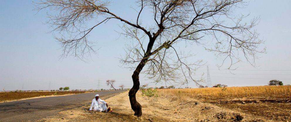 PHOTO: In this May 11, 2016, photo, an Indian farmer sits in the front of his destroyed crop of cotton, alongside a road in one of the drought affected region of Marathwada, in the Indian state of Maharashtra.