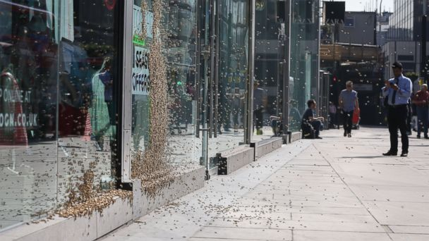 AP london honeybees 2 jt 140517 16x9 608 Shoppers Flee as Queen and Entourage Swarm London Store