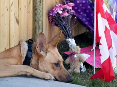 PHOTO: Dogs peek out from under a gate at the Cirillo family home in Hamilton, Ontario near flowers and flags that have been left out, Oct. 23, 2014.