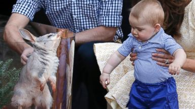 PHOTO: Britains Kate, the Duchess of Cambridge and her husband Prince William watch as their son Prince George looks at an Australian animal called a Bilby, during a visit to Sydneys Taronga Zoo, Australia Sunday, April 20, 2014.